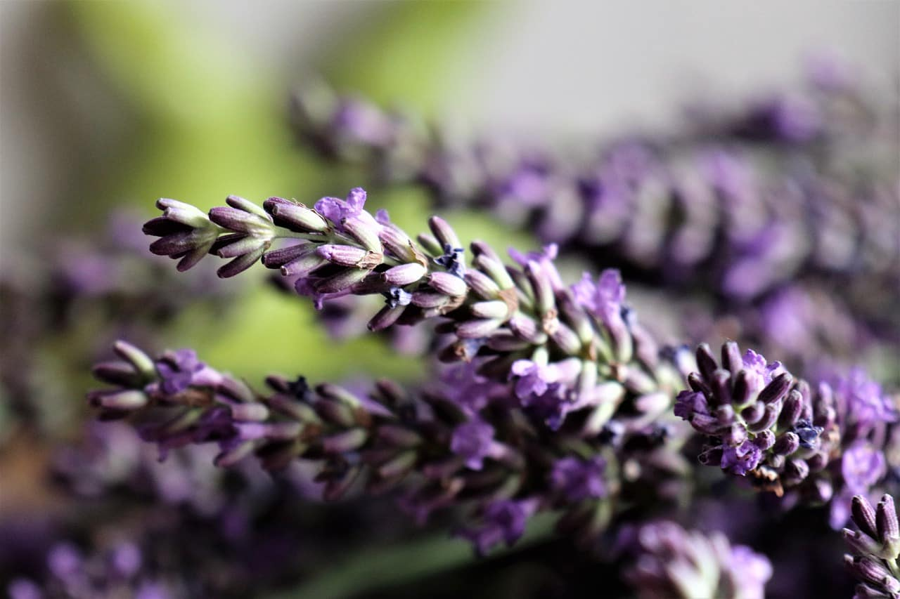 planete-vegetale-huiles-pures-et-precieuse-massage-100% -Bio-et-vegan
